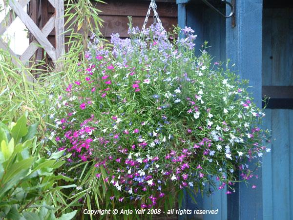 Design Garden Layout