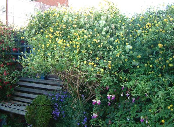 edwardian courtyard garden in devon. Black Bedroom Furniture Sets. Home Design Ideas